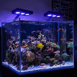 Соленоводни аквариуми