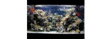 Морска Акваристика