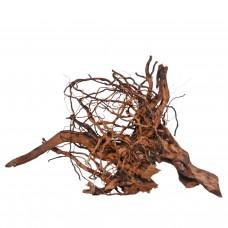Паяков корен (spider root) 30-50 см.